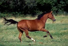Ekonomija konj koji trči nazad